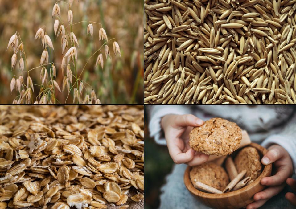 Hafer als Getreide in seinen Erscheiningsformen als Pflanze, Korn und Gebäck.